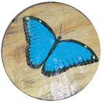 sign cabana blue morpho